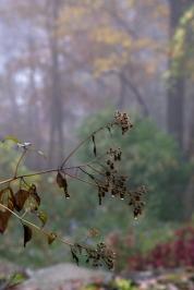 Morning Dew image
