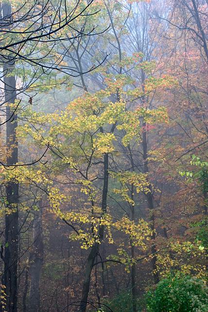Misty woodlands image