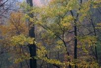 Impressionistic Leaves image
