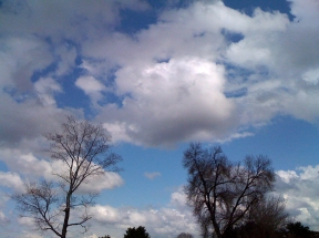 Puffy Clouds and Trees ©2011 Lynn Emberg Purse, All Rights Reserved