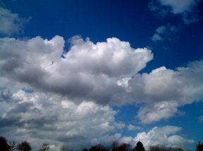Big Sky with Trees ©2011 Lynn Emberg Purse, All Rights Reserved