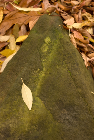 Mossy rock with leaf