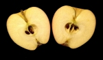 image of apple with seeds