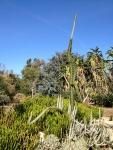 Australia garden