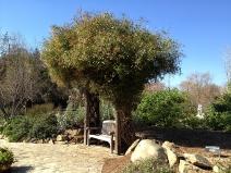 Vine in herb garden