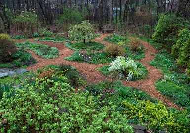 Lower garden in April
