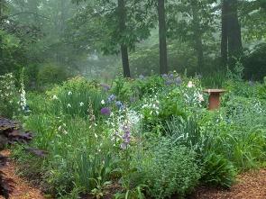 Misty Herb Garden