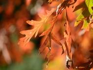 Bronze leaf
