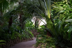 The green path leading to the orchid room