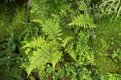 Moss and ferns add texture
