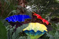 More Chihuly glass bowls