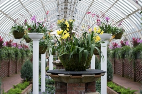 Grand orchid display in the Sunken Garden