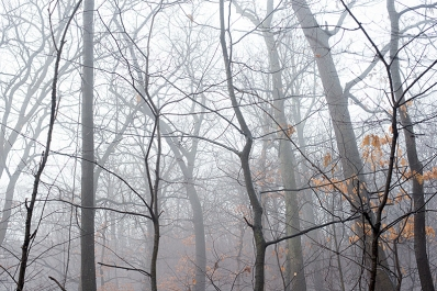 Hillside of misty woods