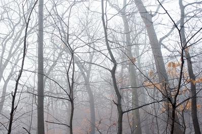 Hillside of misty woods