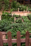 18th Century vegetable garden