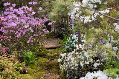 Tranquility garden path