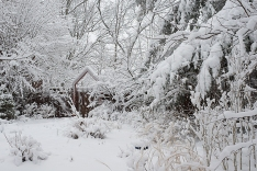 The front garden 2