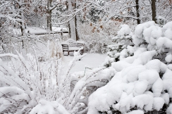 Snowy bench in garden