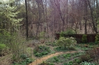 Early April garden and woods
