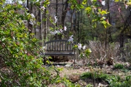 Bench and cherry tree