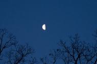 Half moon in April