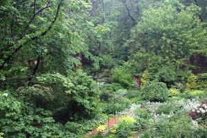 Garden after rain