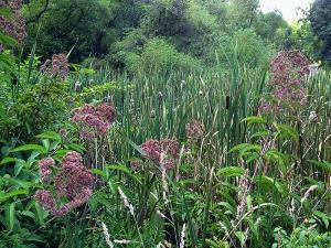 Wetland habitat, western Pennsylvania