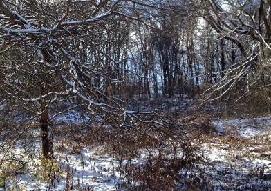 Wild thickets