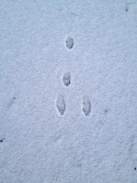 Bunny prints