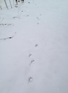 dogprints