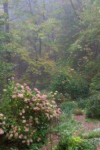 gardenwoodsfogWP