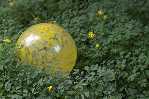 Globe and Corydalis lutea