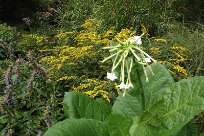 Texture in the herb garden
