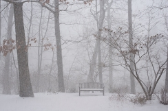 Bench in whiteout
