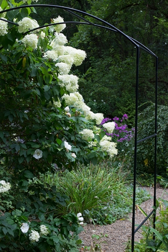 Arbor with Hydrangea