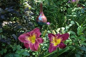 Plum daylilies