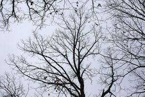 treeskyWP