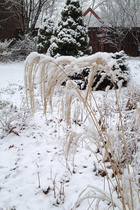 grass gate snow