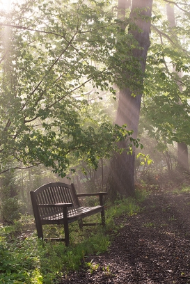 Bench in morning fog
