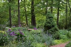 Herb garden in early June