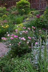 rosy_hillside