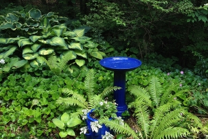 Blue birdbath with ostrich ferns and hostas