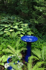 Birdbath, ostrich ferns, and hosta