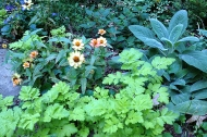 Zinnia and feverfew