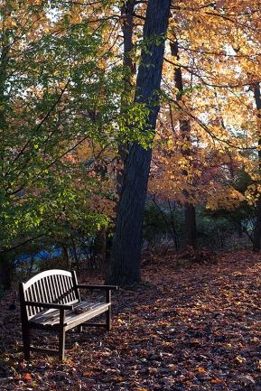 autumnbenchwp