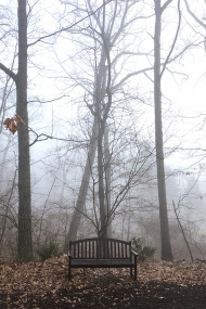 Bench in fog