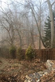 Sun touching the foggy garden