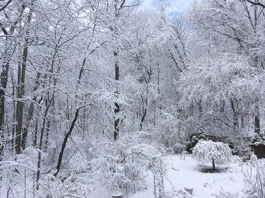 Lower garden in snowy garb