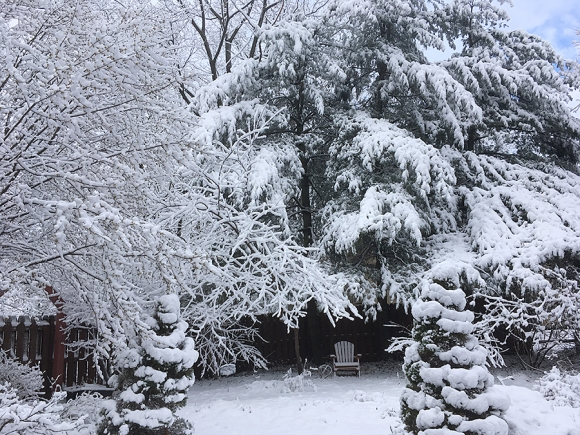 Snowy pines by the gate