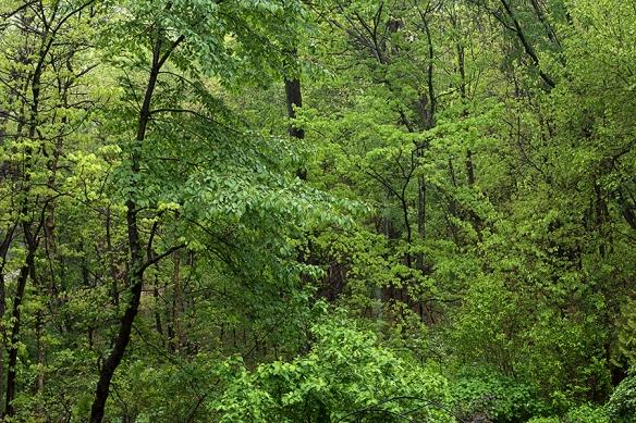 greenwoodland